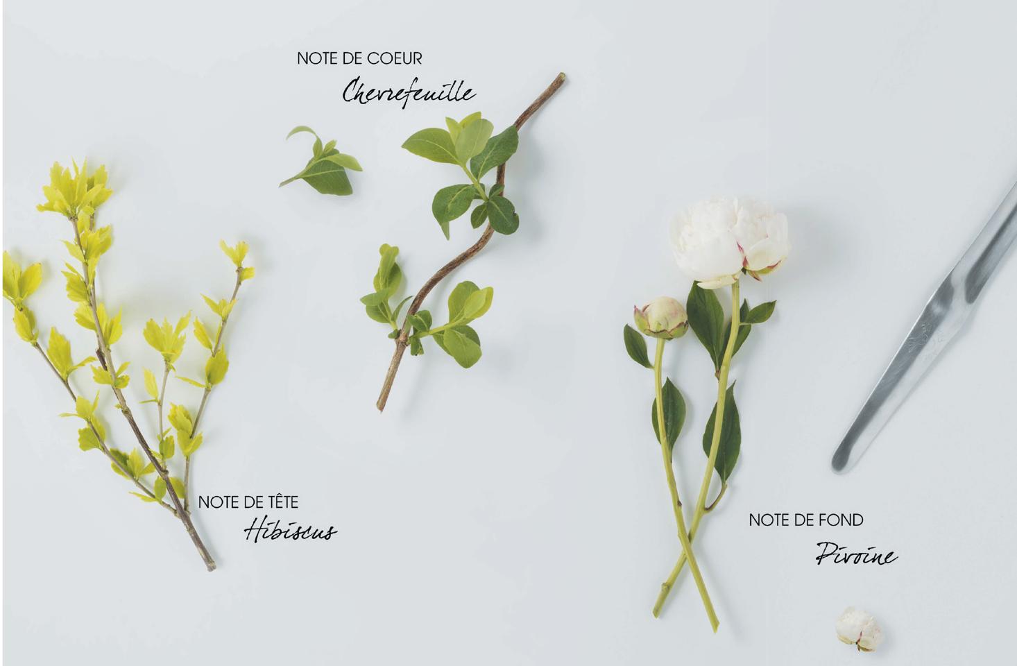 Klorane Klorane Cupuacu ist eine neue Körperpflegelinie mit Bio-Cupuaçu-Butter für die trockene Haut.