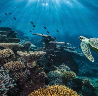 Zum Schutz der Weltmeere lanciert La Mer auf Social Media eine digitale Kampagne.