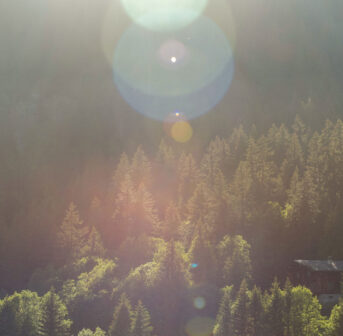 Impressionen von den Waldbaden-Retreats im Berner Oberland.