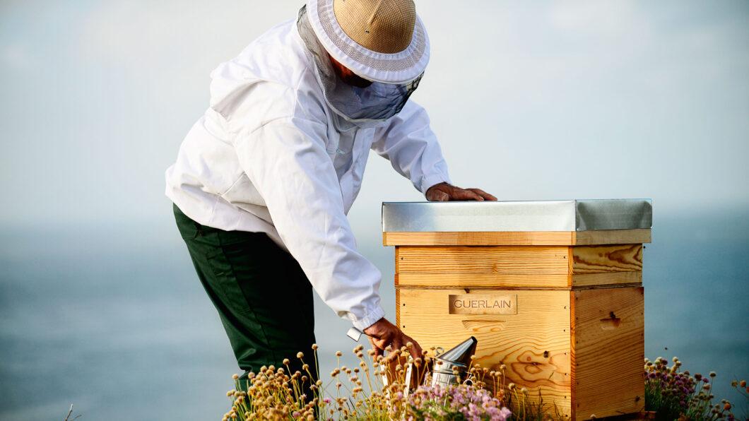 Im Namen der Bienen