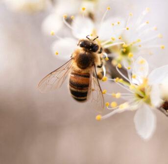Zum Weltbienentag stellt sonrisa verschiedenen Brands vor, die sich für den Bienenschutz einsetzen.